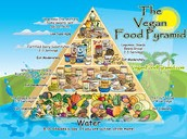 Vegan food pyramid!