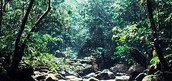 Tropical Moist Forests
