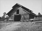 Farm in 1945
