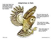 Adatations