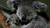 Amazing Moms of the Animal Kingdom