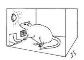 Muizen/Ratten.