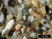 SUBSTRATE:  Mixtures of sand, silt, clay, and shell fragments.