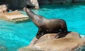 feed sea lions