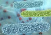 ¿Dónde habitan las bacterias?