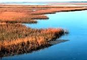North Carolina Estuaries