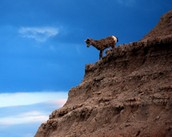 Fauna of the Badlands