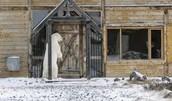 Polar bear at house