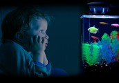THE ADVATAGES OF A GLOFISH
