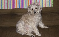 My dog Ruby