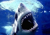 There are many different types of sharks