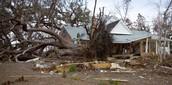 Tree destruction