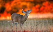 How Wildfires affect Wildlife