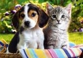 We LOVE Your Pets!!