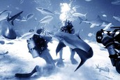shark attack.
