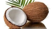 Our Coconuts are the Best