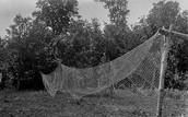 Ojibwe Fish Nets
