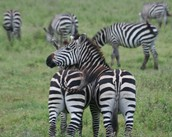 The Great Migration Sept '17 – Book Now