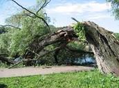 Hurricanes damaging tree life