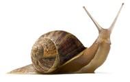 Snail!~Haiku