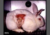 3.More than 15 million warm-blooded animals are used in research every year.