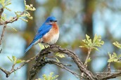 """Culp, Lisa. """"Ten Favorite Trees for Wildlife."""" The National Wildlife Federation Blog Ten Favorite Trees for Wildlife Comments. N.p., n.d. Web. 02 May 2016."""