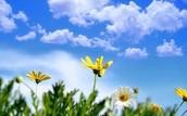 Ballad- Springtime
