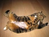 Wanneer de kat het al wat langer heeft