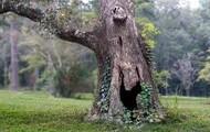 Hard wood trees