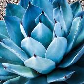 blue plant southwest