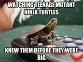 turtle memes galore!
