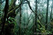 Tropichregenwoudklimaat