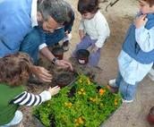 1- Cultivos Orgánicos