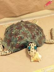 Exploring Sea Turtles Through Project Based Learning