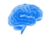 Older Brains Have Different Advantages & Disadvantages When It Comes To Learning a New Language