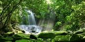 The Beautiful Amazon Rain Forest