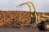 Extracting Timber Throughout Canada