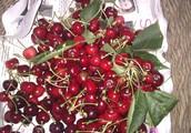L'arbre est plein de fruit !!!!