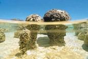 Stromatolite Rock Formations