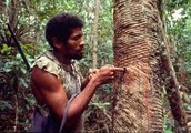 Why Rubber Tapper need the Amazon Rainforest?