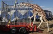 Animal tretment in circuses