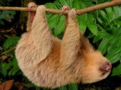 Our animals range from sloths to birds.