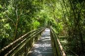 Jungle paths of Iguazu Falls