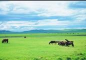 Why should you visit the grasslands?