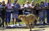 People and a cheetah