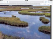 Here is a Texas marsh