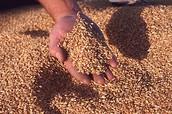 Grain Exchange