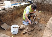 An Archaeologist Finding Bones