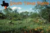 Come to the south texas plains!