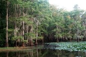 Lake Caddo State Park